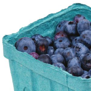 First evidence that blueberry juice improves memory in older adults