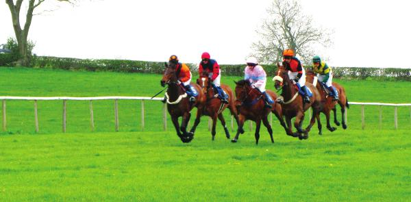 Point to Point Racing - The Spectators View