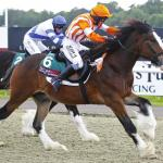 Shire Horse Society captivated at the first ever Shire horse flat race