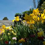 Cornwall Celebrates the Early Arrival of Spring with Garden Festivals