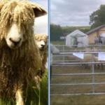 Open Farm Sunday - 8th June 2014, Celebrate British Farming and Food